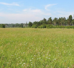 Смесь семян кормовых трав пастбищная (специальная травосмесь)