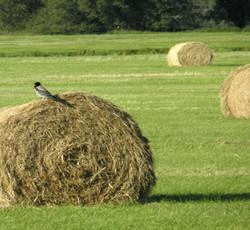 Смесь семян (травосмесь) кормовых трав сенокосно-сенажная.