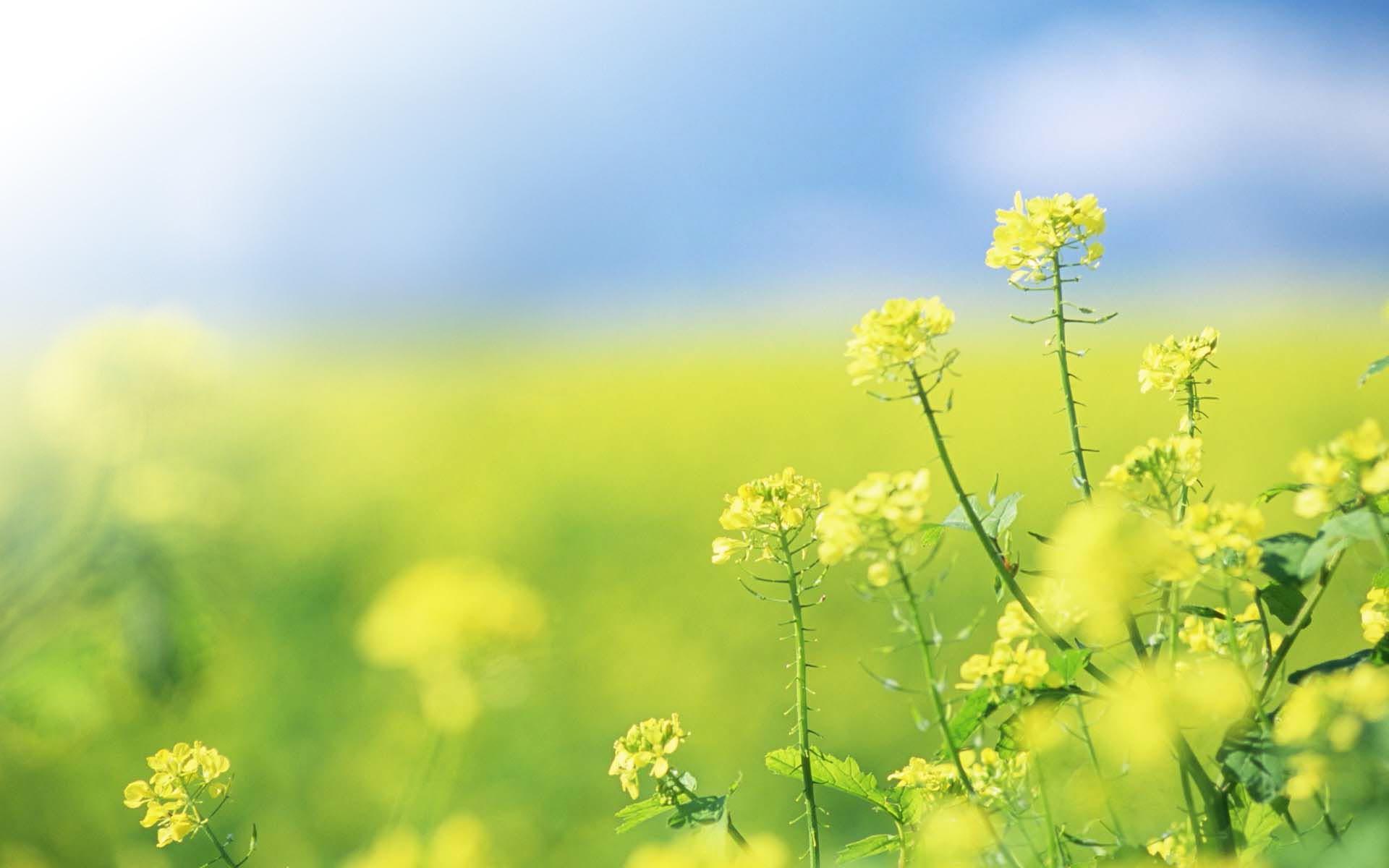 Полевые цветы желтого цвета фото с названиями