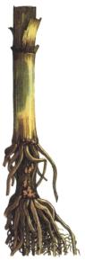 Fusarium Link.