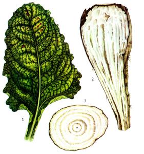 Fusarium Link и Pythium Pringsh