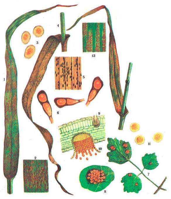 obrabotka-vlagalisha-buroy